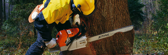 Stihl Forestry Chainsaws